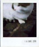 pet sounds 02